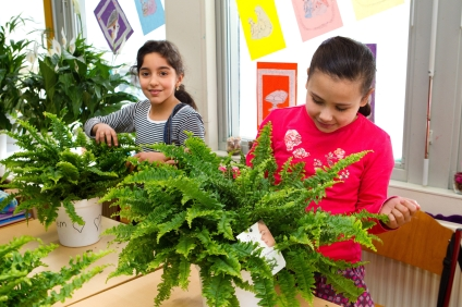 Air So PurePlanten in School Klasbasisschool Al Qalam te Gouda