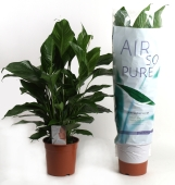 Air So Pure Planten in schoolklas