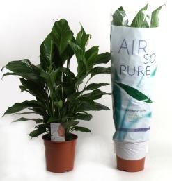 Air So Pure Planten in schoolklas