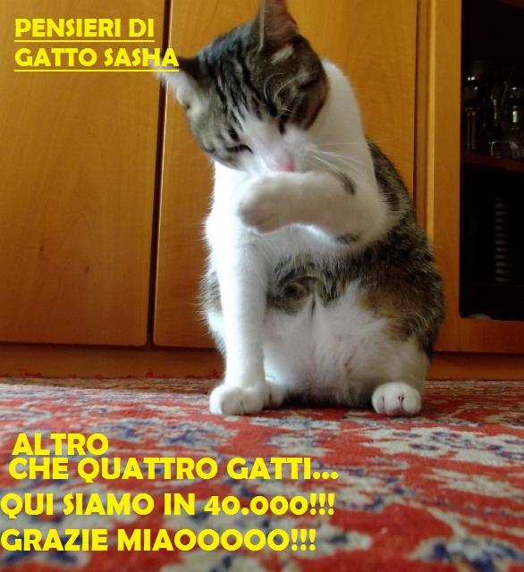 40.000 ...pensieri di gatto Sasha