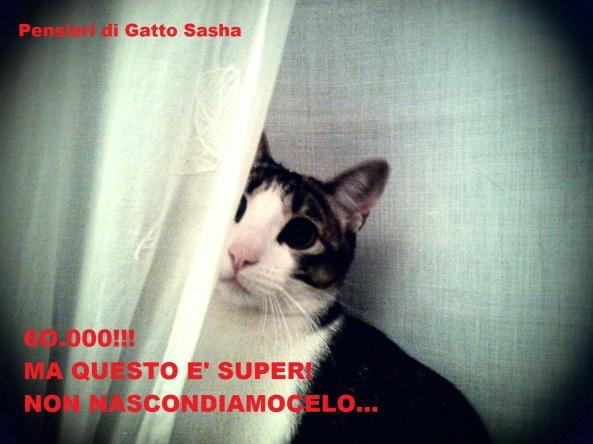 gatto sasha