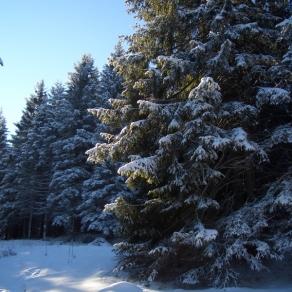 paesaggio-inverno-asiago-2007_5280157750_o (600x800)