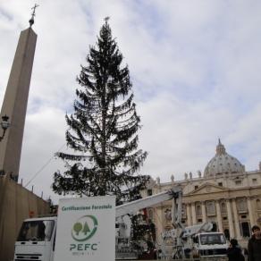 S.Pietro1 -allestimento albero di natale (2009) (800x600)