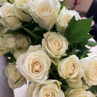 YEAR OF THE ROSES / PHOTO ALBUM FROM BROXTOWE  WOMEN'S PROJECT (BWP), UK